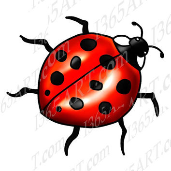 Beautiful Red Lady bug Clipart Illustration, Insect Nature Coloring Page Hand Drawn Line Art PNG JPEG 8x8 Instant Download