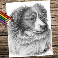 Printable coloring page, Adult Coloring Page, Instant download coloring, collie coloring page, coloring pages, coloring book for adults