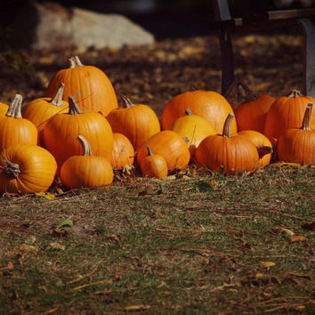Autumn, Fall, Pumpkins, Outdoor Photography, Street Photography, Farm Photography, Fall Harvest