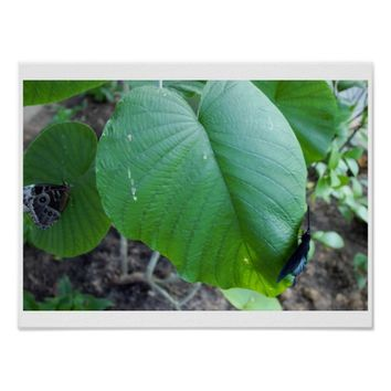 Leaves and Butterflies Poster