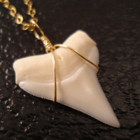 Genuine Shark Tooth Necklace Shark Tooth Jewelry by FiveOfMine