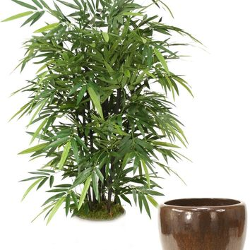 5' Black Bamboo Tree In Glazed Mocha Stoneware Pot