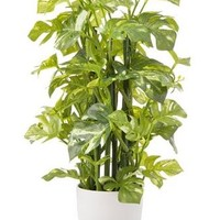 "Artificial Monstera Palm House Plant in Pot - 16.5"" Tall"