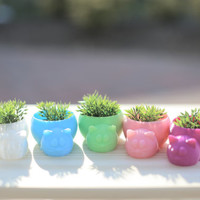 3D Printed Sleepy Cat Planter / Home Decor / Container