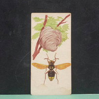 Vintage Hornet Flash Card Insect Color Illustration Paper Ephemera Art Decor Nature Bugs Collage Crafts Supply