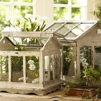 Terrariums | Pottery Barn