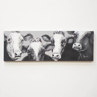 Black and White Four Cows ~ Oil Painting