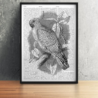 Parrot poster Black and white decor Bird print Dictionary art TO309-B