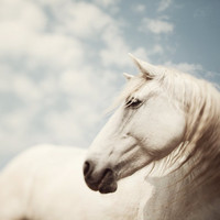 Horse Photography Art Nature Photograph White Animal Camargue Fine Art Print in Pastel Spring Fairytale Dreamy - Wild is the Wind