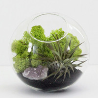 Tabletop Black Sand and Amethyst Cluster Air Plant Terrarium Kit