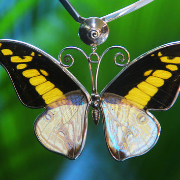 Love Butterfly Autumm. Handmade with natural butterfly wings, big pendant.