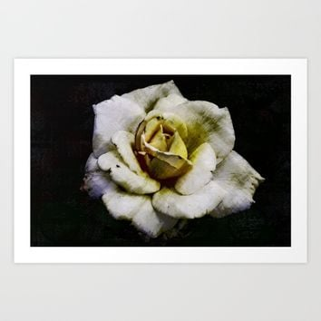 Solo Rose Art Print by LoRo  Art & Pictures