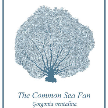 Mid-Century Blue Sea Fan - Sea Life - Coastal Print - Sea Creatures - Beach House Wall Art - Coastal Decor - Nautical Art
