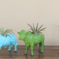 READY TO SHIP Glossy Kelly Green Male Cow / Charolais Planter / Animal Planter / Animal Planters / Air Plant / Air Plant Container