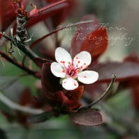 Flower Photography, Wall Art, Home Decor, Spring Blossom, Flower Photography, Plum, Floral, Flower Photo, Wine, Spring, Nature, White