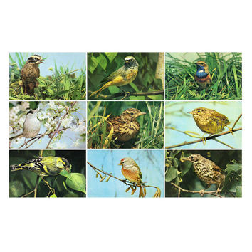 Our Friends the Birds - Set of 18 Vintage Photo Postcards - Printed in the USSR, «Pravda», Moscow, 1975