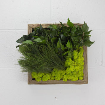 "Greenspiration - Water free green wall art, moss and preserved plants - Vertical garden, green wall decor - 12""x 12"" Rustic Frame"
