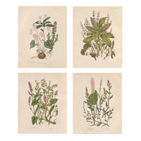 Botanical Wall Decor, Art Print Reproduction, Vintage Flower Art Illustrations, Pink and Green Home & Office Wall Decor, SET OF FOUR