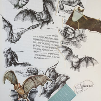 Bats Paper Ephemera Scrap Pack. Vintage Pages paper collage pack for scrapbooking