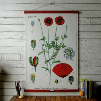 Poppy Botanical Chart / Vintage Pull Down Style Reproduction with Canvas Print and Oak Wood and Brass Hanger