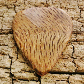 Sycamore Lace Burl - Wooden Guitar Pick