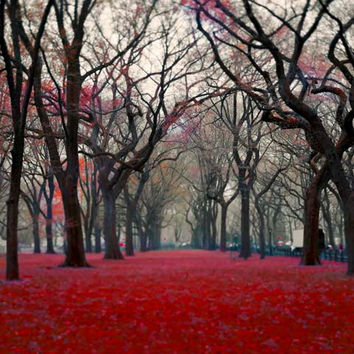 Black Friday, Sale, Central Park Photograph- Fall red black gray- wall decor- slate fog- 8x10 Autumn photography