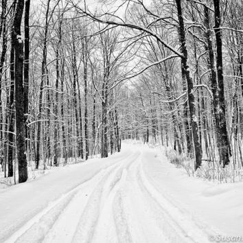 Black & White Photography, Fine Art Print, Photo Cards, Winter Landscape, Holidays, Trees, Road, Snow, White, Wall Decor