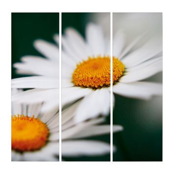 Two pretty daisies. triptych