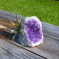 Natural Crystal Air Plant Kit - Amethyst, Citrine or Quartz - Air Plant Holder, Living Terrarium, Crystal Garden, Geode Decor!