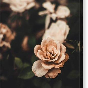 Rose - Canvas Print