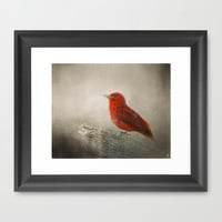 Song of the Summer Tanager 1 - Birds Framed Art Print by Jai Johnson