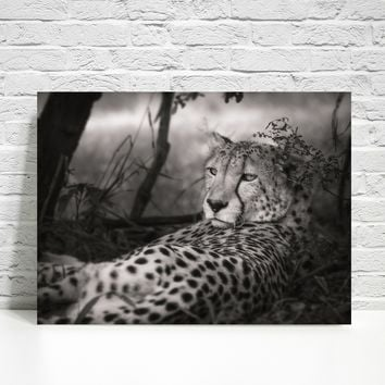 Cheetah Wall Print