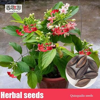 Rare Quisqualis Seeds Bonsai Flower Seeds Heirloom Quisqualis Perennial Flower Seeds plant for home garden 3pcs