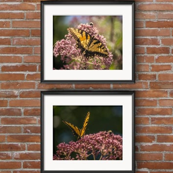 Butterflies in Flight Nature Prints - Flower and Butterflies Photographic Prints - 8x10 - 5x7