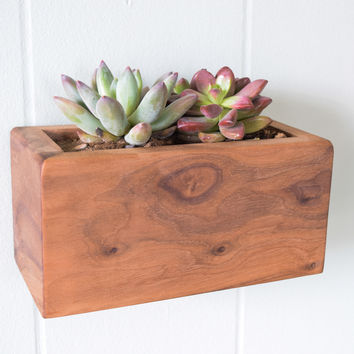 W/S Succulent Box Planter, Walnut Large