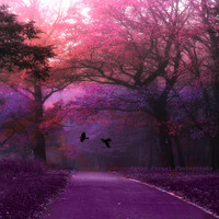 "Nature Photography, Surreal Haunting Trees Forest Woodlands, Ravens, Purples Pink Fine Art Nature Photograph 5"" x 5"""