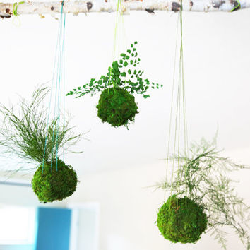 Kokedama Hanging Moss Ball - String Garden. Care Free, Real Preserved Grassy Fern Plant. Moss and Fern Art.