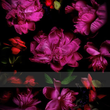 Peony and Rose Photography - Beautiful Botanical 8x10 Print - Black Pink Red