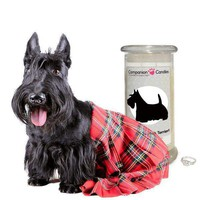 I Love My Scottish Terrier! - Companion Candles