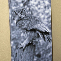 Owl Photo Canvas Nature and Wildlife Photo Canvas 10x20 Black and White