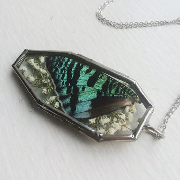Fantasy of Flight Necklace // Genuine Sunset Moth Wing Glass Locket Necklace