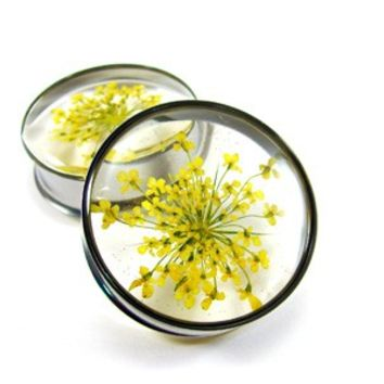 """Yellow Queen Anne's Lace Embedded Flower Plugs gauges - 9/16"""", 5/8"""", 3/4"""", 7/8"""", 1"""""""
