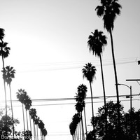Black and White Photography - Poster - A palm tree street in Manhattan Beach, California