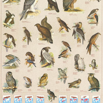 Birds of Prey Raptors Education Poster 27x39