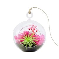 "Bliss Gardens Air Plant Terrarium Kit with 4"" Round Glass / Pink Paradise"