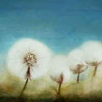Mystery Dandelions Fine Art Watercolor Painting Nature Art
