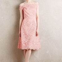 Persica Lace Dress