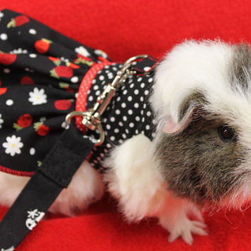 Strawberry and polka dot harness dress for your guinea pig ,rat or small pet . Comes with matching leash