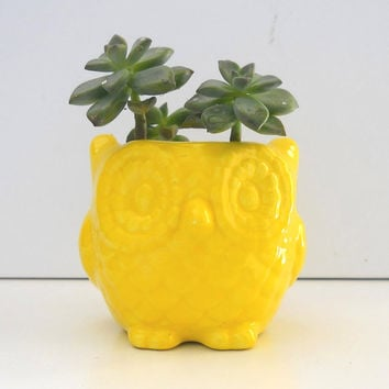 Ceramic Mini Owl Desk Planter Vintage Design in lemon Succulent cactus Planter