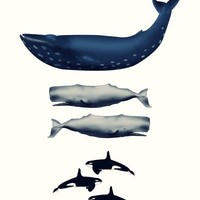 Whale Counting 123  Art Print by cleopetradesign.com | Society6